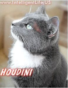 Houdini the cat - Craig Anderson