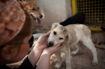 Vafa animal shelter Iran (Behrouz Mehri_AFP_Getty Images)
