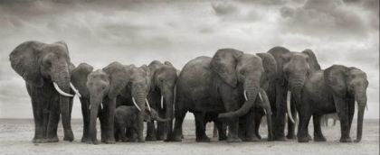 Elephant Group on Bare Earth