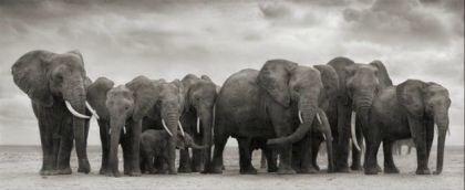 Elephant Group on Bare Earth