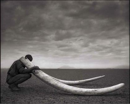 Nick Brandt Ranger with Tusks Amboseli 2011. Courtesy Source Photographica.