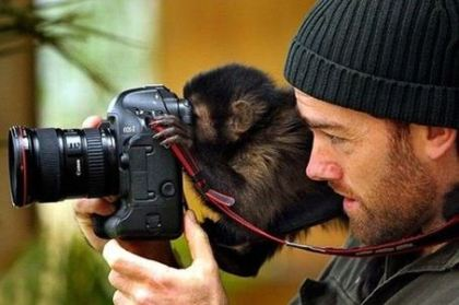 Chimp with Camera