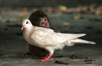 Chimp and bird