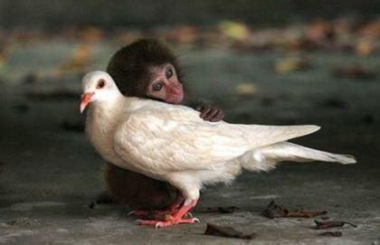 Chimp and bird