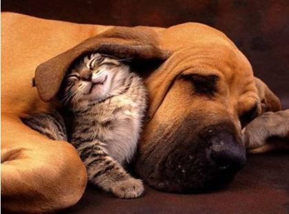 "Another ""every cat should have it's own dog"" photograph"