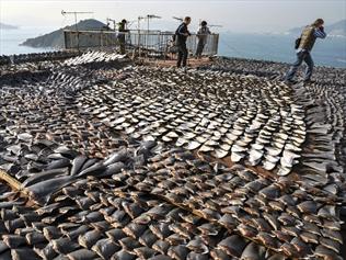Shark fins on a roof in Hong Kong