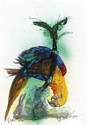 Cuban Macaw by Ralph Steadman