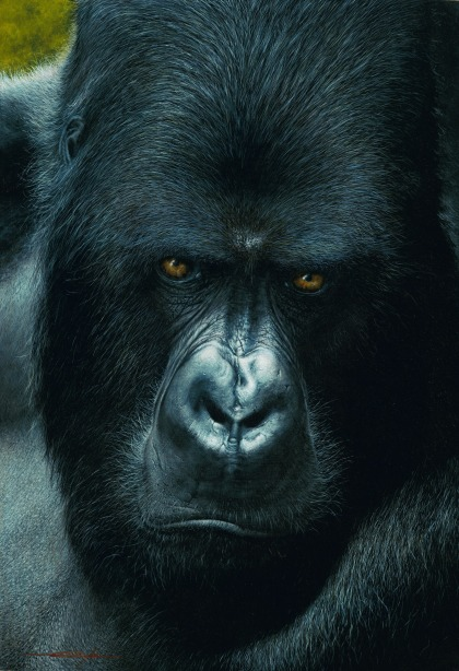 Mountain Gorilla by Daniel Taylor (acrylic)