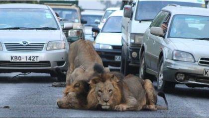Traffic in Nairobi Copyright Gareth Jones, Barcroft Media