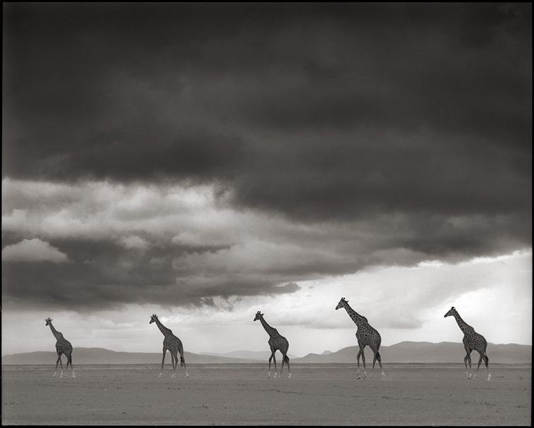 https://acebourke.files.wordpress.com/2013/09/giraffes-crossing-lake-bed.jpg