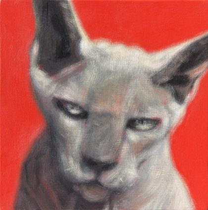 Devon Rex by Peter O'Dougherty