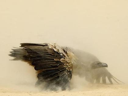 wildlife photographer of the year finalist