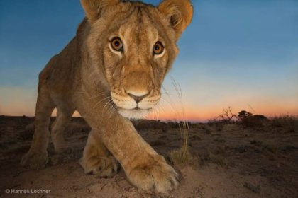 Photograph by Hannes Lochner (South Africa). Wildlife Photographer of the Year 2013.