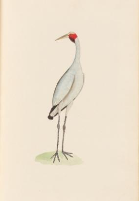 New Holland Crane, 1790s
