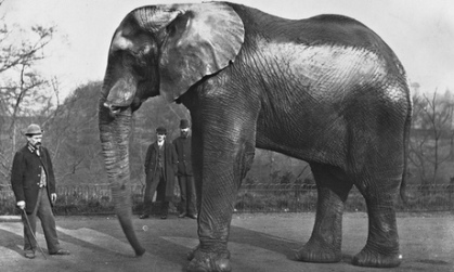 Jumbo at London Zoo, circa 1890. Photograph: Getty Images