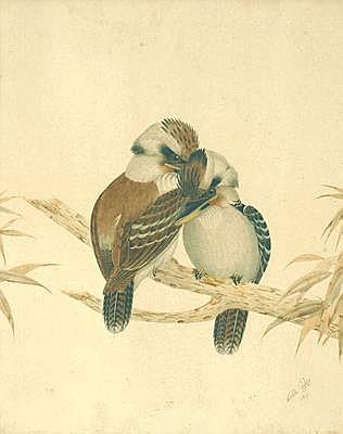 Kookaburra by Neville Henry Cayley (1853-1903)