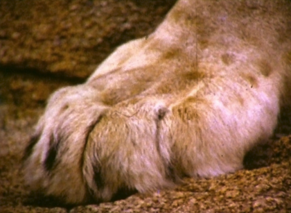 Christian's paw by Ace Bourke 1972