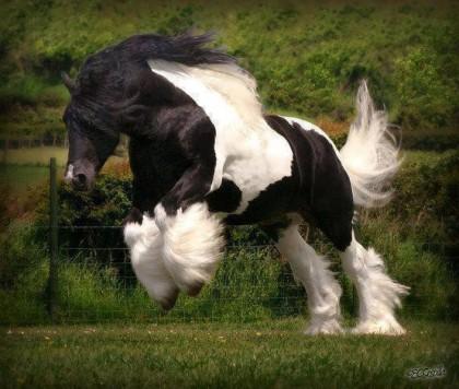 horse leap