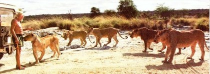George Adamson and his lions