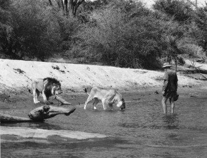 George Adamson with Boy(left) and Christian wading in the Tana River at Kora.