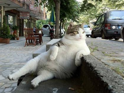 sitting-cat1