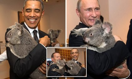Koalas being manhandled at the G20 in Brisbane