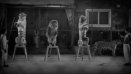 Broken Cats by Britta Jaschinski winner of the Wildlife Photojournalist Award